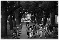 Women students in tree-covered alley, University of Texas. Austin, Texas, USA ( black and white)