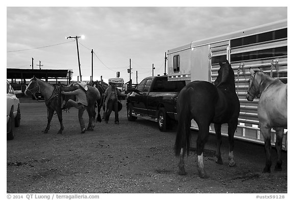 Trailers and horses. Fort Worth, Texas, USA (black and white)