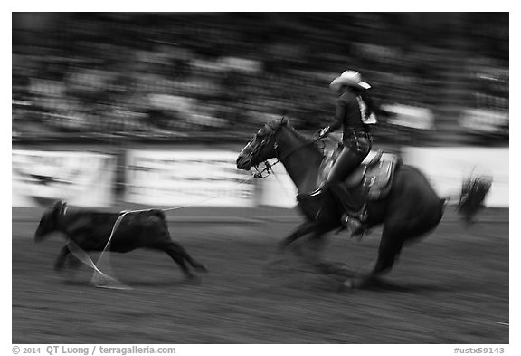 Individual roping, Stokyards Championship Rodeo. Fort Worth, Texas, USA (black and white)