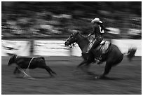 Individual roping, Stokyards Championship Rodeo. Fort Worth, Texas, USA ( black and white)