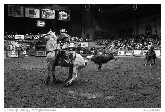 Team finishing roping, Stokyards Rodeo. Fort Worth, Texas, USA (black and white)