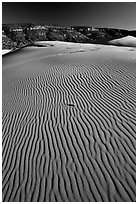 Ripples on sand dunes, late afternoon, Coral Pink Sand Dunes State Park. Utah, USA (black and white)