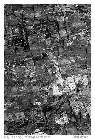 Petrified wood, Escalante Petrified Forest State Park. Utah, USA (black and white)