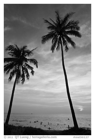 Palm trees and people in water at sunset. Phu Quoc Island, Vietnam (black and white)