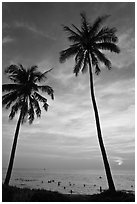 Palm trees and people in water at sunset. Phu Quoc Island, Vietnam ( black and white)