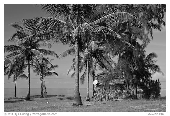 Palm trees, hut with satellite dish. Phu Quoc Island, Vietnam (black and white)