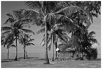 Palm trees, hut with satellite dish. Phu Quoc Island, Vietnam ( black and white)