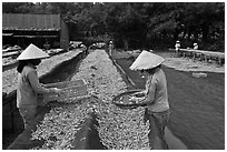 Women working drying fish. Phu Quoc Island, Vietnam ( black and white)