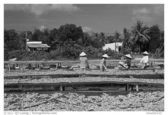 Dried fish production. Phu Quoc Island, Vietnam (black and white)