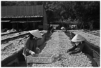 Dry fish processing. Phu Quoc Island, Vietnam ( black and white)