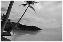 Palm-fringed beach, Bai Sau. Phu Quoc Island, Vietnam ( black and white)