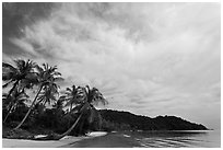 Bai Sau Palm-fringed beach. Phu Quoc Island, Vietnam (black and white)