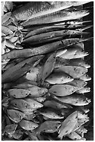Close-up of fish for sale, Duong Dong. Phu Quoc Island, Vietnam ( black and white)