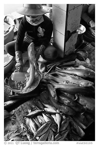 Woman cleans up fish for sale, Duong Dong. Phu Quoc Island, Vietnam (black and white)