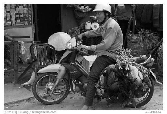 Moterbike rider carrying chickens, Duong Dong. Phu Quoc Island, Vietnam (black and white)