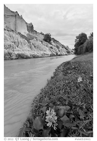Flowers and aquatic plants on edge of Fairy Stream. Mui Ne, Vietnam (black and white)