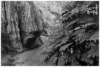 Flowers and rock walls, Fairy Spring. Mui Ne, Vietnam (black and white)