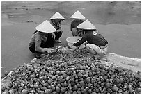 Women crushing shells to extract eddible part. Mui Ne, Vietnam (black and white)