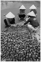 Women processing shells on beach. Mui Ne, Vietnam ( black and white)