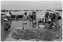 Freshly harvested shells on beach with backdrop of fishing boats. Mui Ne, Vietnam ( black and white)