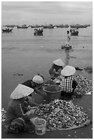 Women process scallops on beach harbor. Mui Ne, Vietnam ( black and white)