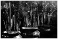 Urns with burning incense sticks, Thien Hau Pagoda. Cholon, District 5, Ho Chi Minh City, Vietnam (black and white)