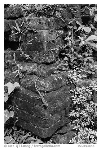 Reptile on corner of ruined temple. My Son, Vietnam (black and white)