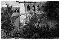 Vegetation and walls detail. Hoi An, Vietnam ( black and white)
