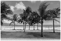 Palm-lined beachfront promenade. Da Nang, Vietnam (black and white)
