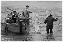 Men operating fish traps. Vietnam (black and white)