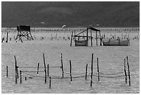 Pilings and fishing nets in lagoon. Vietnam ( black and white)