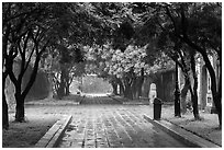 Tree-covered pathway, imperial citadel. Hue, Vietnam (black and white)