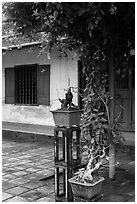 Bonsai trees and monastic buildings, Thien Mu pagoda. Hue, Vietnam (black and white)