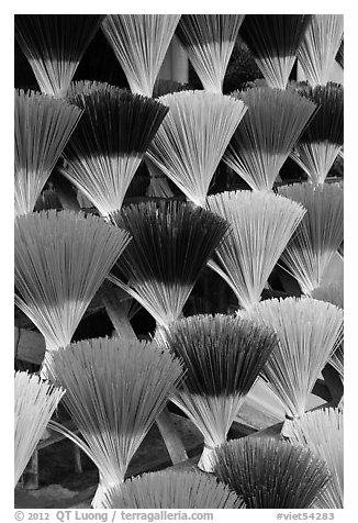 Multicolored incense sticks. Hue, Vietnam (black and white)
