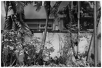 Trees and walls, Tran Hung Dao temple. Ho Chi Minh City, Vietnam (black and white)