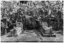 Tombs and banana trees. Ben Tre, Vietnam (black and white)