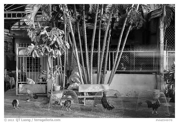 Chicken and roosters encaged on sidewalk. Tra Vinh, Vietnam (black and white)
