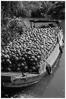 Barge loaded with coconuts. Tra Vinh, Vietnam ( black and white)