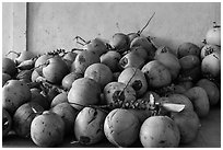 Coconuts. Can Tho, Vietnam (black and white)