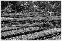 Woman watering flowers in nursery. Sa Dec, Vietnam ( black and white)