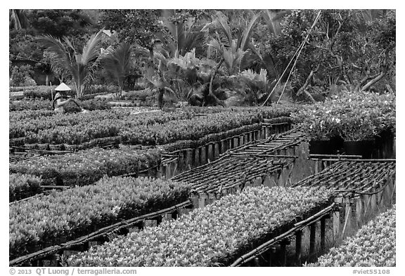 Woman watering flowers in nursery. Sa Dec, Vietnam (black and white)