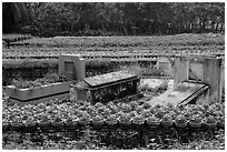 Tombs amidst rows of potted flowers. Sa Dec, Vietnam ( black and white)