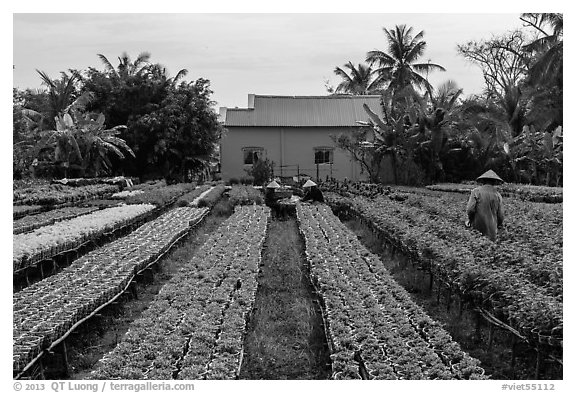 Workers amongst rows of potted flowers. Sa Dec, Vietnam (black and white)