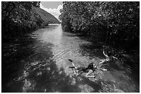 Children swim in mangrove forest, Bay Canh Island, Con Dao National Park. Con Dao Islands, Vietnam ( black and white)