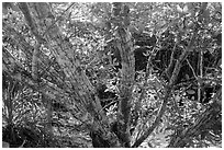 Tropical forest, Bay Canh Island, Con Dao National Park. Con Dao Islands, Vietnam ( black and white)