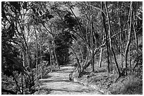 Trail, Bay Canh Island, Con Dao National Park. Con Dao Islands, Vietnam ( black and white)