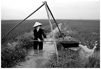 Woman doing irrigation work in a rice field. Vietnam ( black and white)