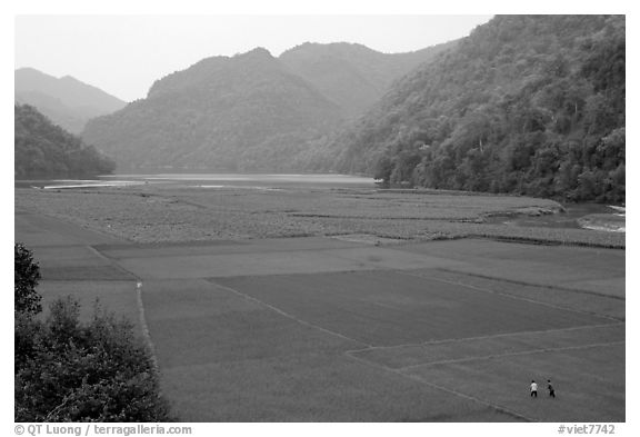 Rice fields below the Pac Ngoi village on the shores of Ba Be Lake. Northeast Vietnam