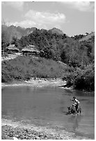 Thai woman riding a water buffalo across a pond near a village, near Tuan Giao. Northwest Vietnam ( black and white)