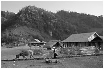 Plowing the fields with a water buffalo, near Tuan Giao. Northwest Vietnam (black and white)